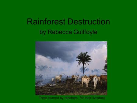 Rainforest Destruction by Rebecca Guilfoyle Trees burned by ranchers, for their livestock.