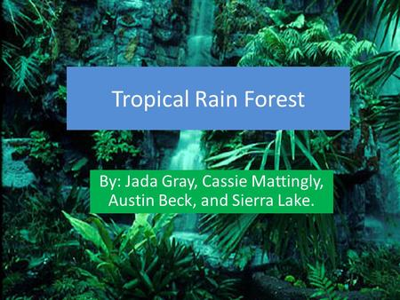 Tropical Rain Forest By: Jada Gray, Cassie Mattingly, Austin Beck, and Sierra Lake.