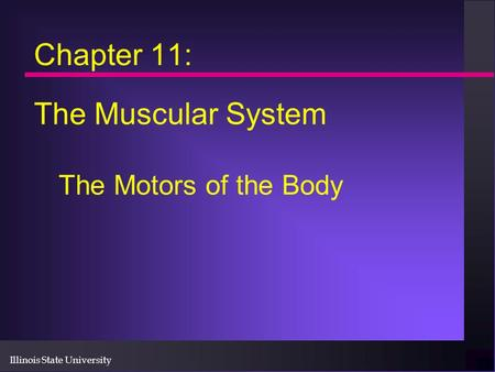 Chapter 11: The Muscular System The Motors of the Body.