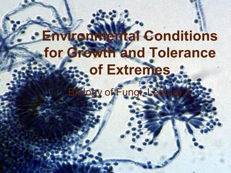 BIOL 4848/6948 (v. S07) Copyright © 2007 Chester R. Cooper, Jr. Environmental Conditions for Growth and Tolerance of Extremes Biology of Fungi, Lecture.
