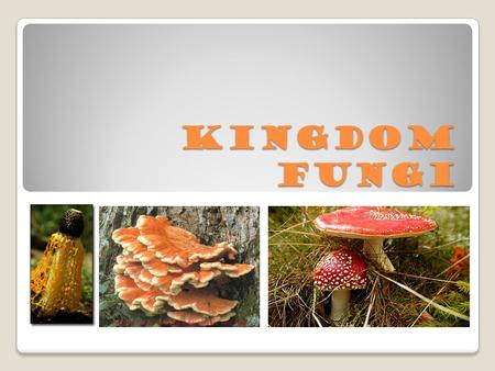 Kingdom Fungi. Targets 1. Describe the basic structure of fungi. 2. Explain the function of spores in fungal reproduction. 3. Compare and contrast the.