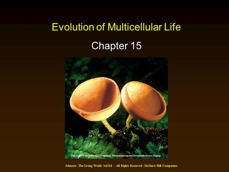 Johnson - The Living World: 3rd Ed. - All Rights Reserved - McGraw Hill Companies Evolution of Multicellular Life Chapter 15 Copyright © McGraw-Hill Companies.