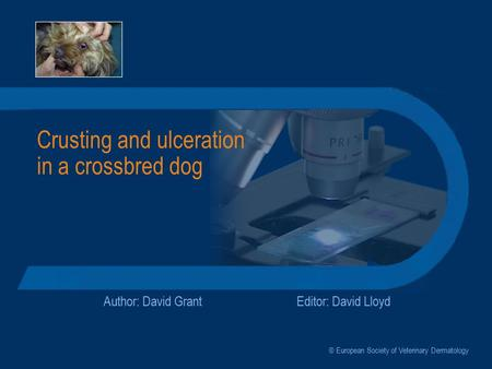 Crusting and ulceration in a crossbred dog Author: David GrantEditor: David Lloyd © European Society of Veterinary Dermatology.