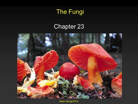 The Fungi Chapter 23 Mader: Biology 8th Ed..