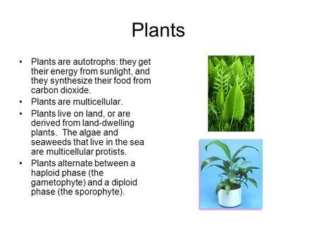 Plants Plants are autotrophs: they get their energy from sunlight, and they synthesize their food from carbon dioxide. Plants are multicellular. Plants.