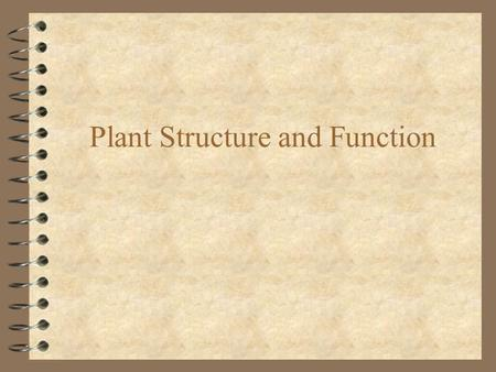 Plant Structure and Function
