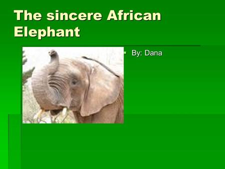The sincere African Elephant  By: Dana. The African Elephant's description  Light brown to dark gray in skin color.  5-14 ft. tall and 6,000- 15,000.