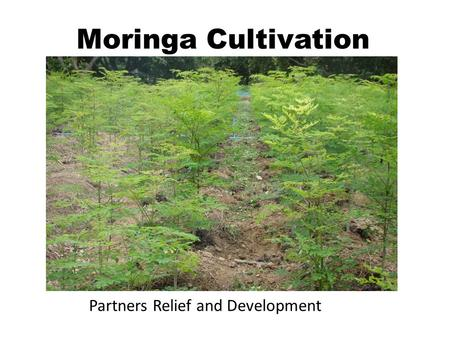 Moringa Cultivation Partners Relief and Development.