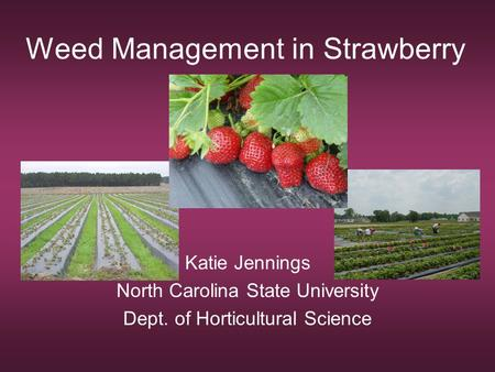 Weed Management in Strawberry Katie Jennings North Carolina State University Dept. of Horticultural Science.