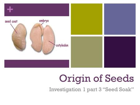"Investigation 1 part 3 ""Seed Soak"""