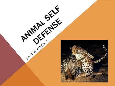 ANIMAL SELF DEFENSE UNIT 4 WEEK 2. CHAMELEON This word describes a lizard that can change the color of its skin to blend in with its surroundings.