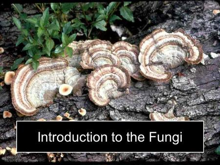 Introduction to the Fungi. Learning Objectives and Disclosure Information Upon completion of this workshop, participants should be able to: Set up a sampling.