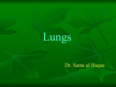 Lungs Dr. Sama ul Haque.