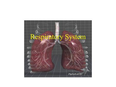 Respiratory System. Nose – produces mucus, warms, moistens, and filters air, and resonance chamber for speech Pharynx – passage way for air and food.