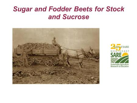 Sugar and Fodder Beets for Stock and Sucrose. Three Classes of Field Beets  Mangels (Mangolds, Mangel-Wurzel)  Fodder Beets  True Sugar Beets.