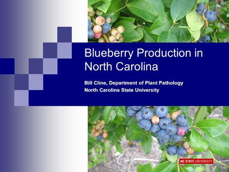 Blueberry Production in North Carolina Bill Cline, Department of Plant Pathology North Carolina State University.