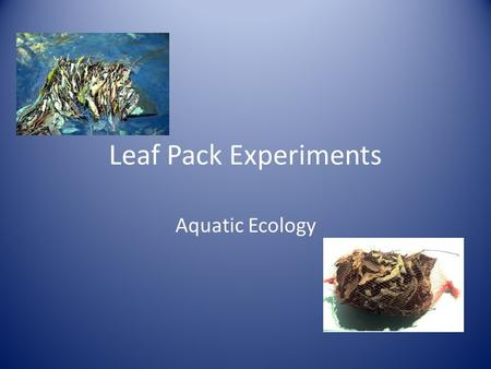 Leaf Pack Experiments Aquatic Ecology. Background Historically, most small streams in the eastern United States were forested. Leaf fall from the forest.