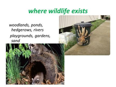 Where wildlife exists woodlands, ponds, hedgerows, rivers playgrounds, gardens, sand.