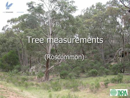 Tree measurements (Roscommon). Research objective: To compare modeled values of TB (using τ-ω model*) with airborne values of TB over heterogeneous tree-covered.