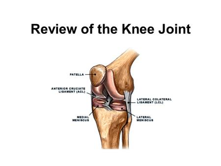 The Knee Joint Anatomy and Physiology of Human Movement 420: ppt ...
