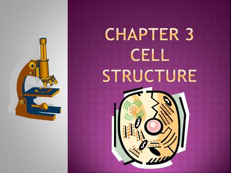 Chapter 3 Cell Structure