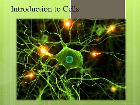 Introduction to Cells. 2 Review- Cell Theory  All organisms are composed of one or more cells.  Cells are the smallest living units of all living organisms.