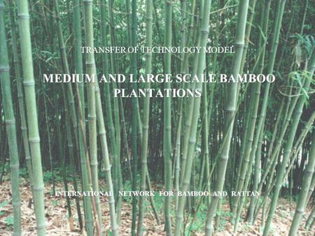 Bamboos grow more rapidly than trees and start to yield within three or four years of planting. Plantation establishment requires minimal capital investment.