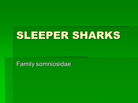 SLEEPER SHARKS Family somniosidae. Classification  Kingdom animalia  Phylum chordata  Class chondrichthyes  Order squaliformes  Family somniosidae.