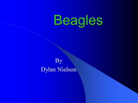 Beagles By Dylan Nielson.