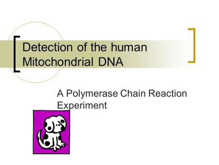 Detection of the human Mitochondrial DNA A Polymerase Chain Reaction Experiment.