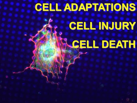 CELL ADAPTATIONS CELL INJURY CELL DEATH.