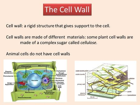 The Cell Wall Cell wall: a rigid structure that gives support to the cell. Cell walls are made of different materials: some plant cell walls are made.
