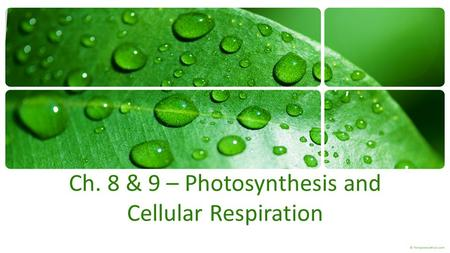 Ch. 8 & 9 – Photosynthesis and Cellular Respiration.