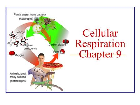 Cellular Respiration Chapter 9