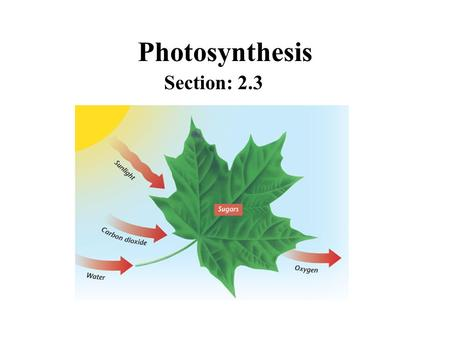 Photosynthesis Section: 2.3.