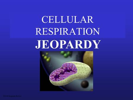 CELLULAR RESPIRATION JEOPARDY S2C06 Jeopardy Review.