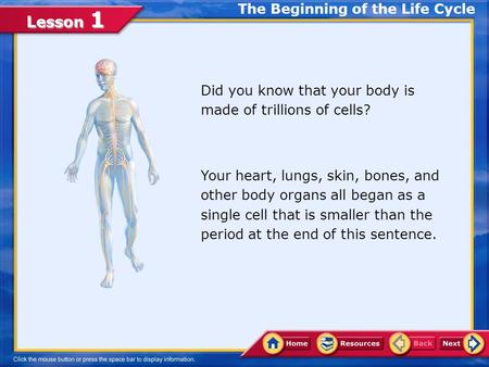 Lesson 1 Did you know that your body is made of trillions of cells? Your heart, lungs, skin, bones, and other body organs all began as a single cell that.