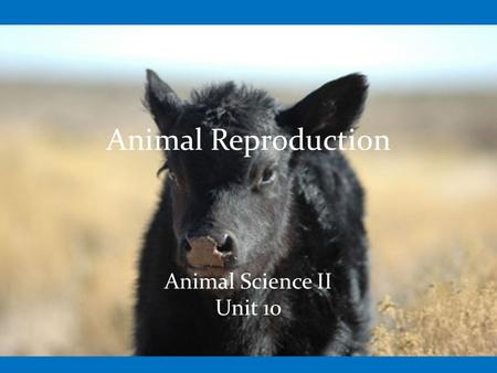 Animal Reproduction Animal Science II Unit 10. Objectives Identify and describe the male and female reproductive organs Describe the function of the endocrine.