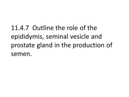 11.4.7 Outline the role of the epididymis, seminal vesicle and prostate gland in the production of semen.