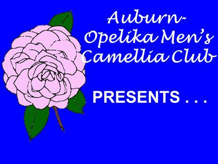 Auburn- Opelika Men's Camellia Club PRESENTS.... The Camellia Alabama's State Flower.
