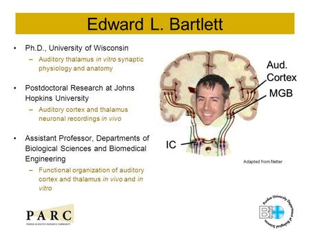 Edward L. Bartlett Ph.D., University of Wisconsin –Auditory thalamus in vitro synaptic physiology and anatomy Postdoctoral Research at Johns Hopkins University.