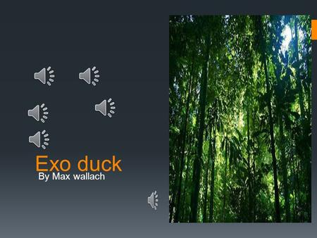 Exo duck By Max wallach Planet rainforest  ?1  The.