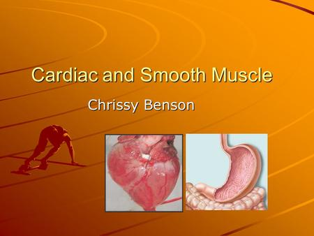 Cardiac and Smooth Muscle Chrissy Benson. Cardiac Muscle cardiocytes=cardiac muscle cells 10-20µm in diameter; 50-100µm in length Single nucleus Myofibrils.