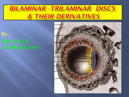BILAMINAR -TRILAMINAR DISCS & THEIR DERIVATIVES