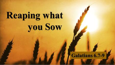 Reaping what you Sow Galatians 6.7-9.