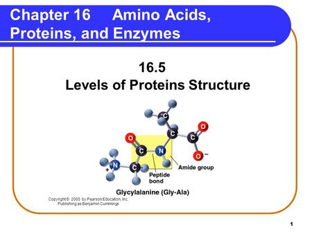 Chapter 16 Amino Acids, Proteins, and Enzymes