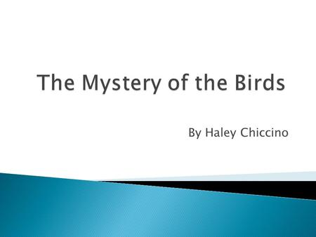 The Mystery of the Birds