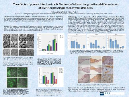 The effects of pore architecture in silk fibroin scaffolds on the growth and differentiation of BMP7-expressing mesenchymal stem cells Yufeng. Zhang Ph.D.