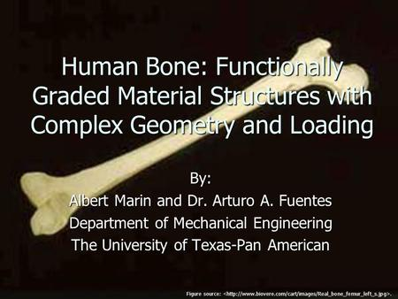 Human Bone: Functionally Graded Material Structures with Complex Geometry and Loading By: Albert Marin and Dr. Arturo A. Fuentes Department of Mechanical.