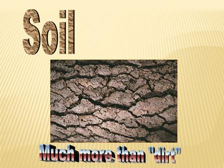 Soil Much more than dirt.